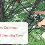 10 Basic Safety Guidelines For Pruning And Trimming Trees